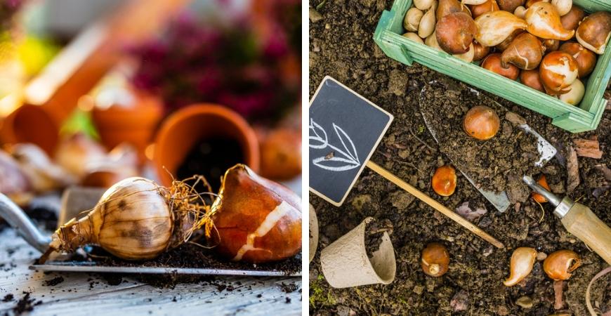 Bloembollen en zaden kopen bij Tuincentrum De Wildernis in Veenendaal en Rhenen