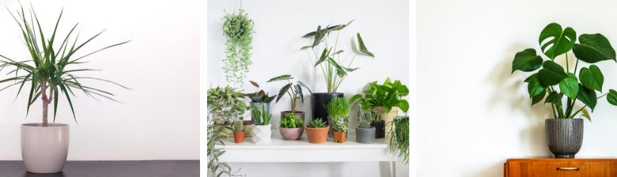 Groene kamerplanten kopen bij Tuincentrum De Wildernis