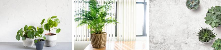 Kamerplanten kopen bij tuincentrum De Wildernis